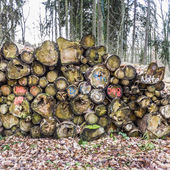 Woodpile in the forest — Stock Photo