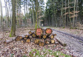 Woodpile in the forest — Foto Stock