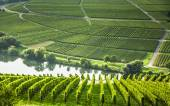 Famous Moselle Sinuosity with vineyards — Stock Photo