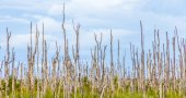 Swamp area with dead trees in the everglades — Stock Photo
