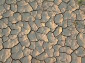 Cracked and dried earth texture  — Stock Photo
