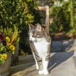 White and brown cat sitting on doorstep of the house — Stock Photo #69971157