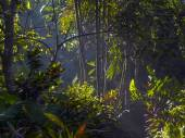 Sunrise in Ubud in the bamboo and palm trees — Stock Photo