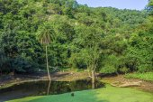 Forest landscape with lake in Sariska national park — Stock Photo