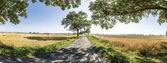 Vicolo con i vecchi alberi di quercia e vecchia strada a Usedom — Foto Stock