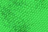 Green reptile skin — Stock Photo