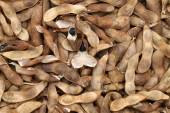 Soybeans pod — Stock Photo
