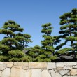 Japanese garden with pine trees — Stock Photo #56036301