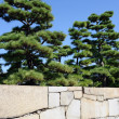Japanese garden with pine trees — Stock Photo #56037745