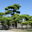 Japanese garden with pine trees — Stock Photo #56038537