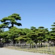 Japanese garden with pine trees — Stock Photo #56040015