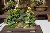 Bonsai flower — Stock Photo