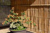Bonsai of flower — Stock Photo