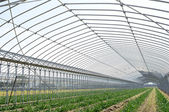 Agricultural building for farming — Stock Photo