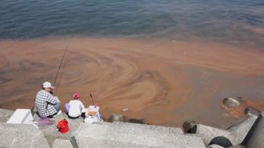 Red algae blooms in a sea — Stock Video