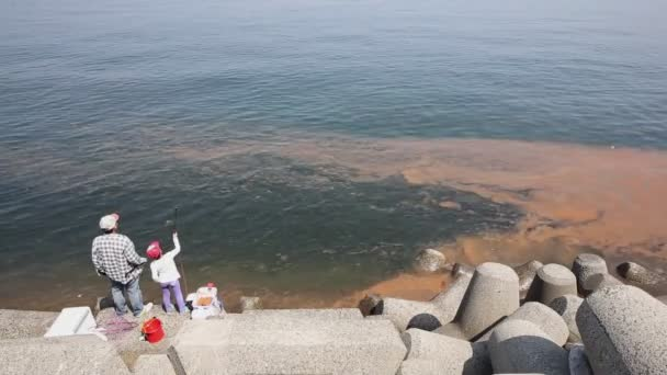 Red algae blooms in a sea — Vidéo