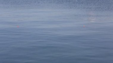 Float for fishing — Stock Video