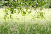Backlit leaves in forest — Zdjęcie stockowe