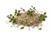 Thyme Fresh and Dried Isolated on White — Stock Photo