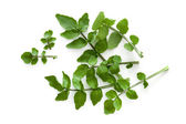 Watercress Isolated on White Background Overhead View — Stock Photo