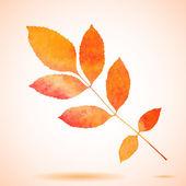 Orange watercolor painted vector ash tree leaf — Stockvektor