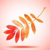 Orange watercolor painted vector rowan tree leaf — Stock Vector