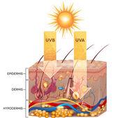 UVB and UVA radiation — Stock Vector