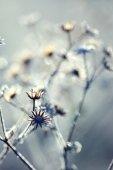 Frozen plant — ストック写真