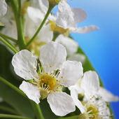 Kwiat wiosny — Zdjęcie stockowe