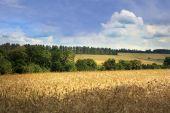 Idealistic summer landscape — Stock Photo
