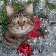 Gray tabby cat in Christmas tinsel, wearing a red bow — Stock Photo #64328053