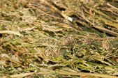 Closeup image of a large bundle of marijuana confiscated by law enforcement — Stock Photo