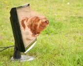 Orange tabby cat dashing out of a computer monitor — Stock Photo