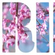 Spring text with pink Redbud tree flowers, on white — Stock Photo #64339453
