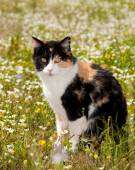 Beautiful calico cat sitting in the middle of spring wild flowers — Stock Photo
