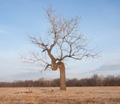 Crooked tree growing in an open field - concept of perseverance despite difficult conditions — Stock Photo