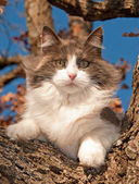 Gorgeous diluted calico cat up in a tree in winter — Stock Photo