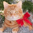 Ginger tabby cat wearing a red bow, with silver tinsel and green wreath background — Stock Photo #71277897