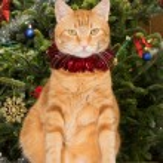 Gato laranja sentado na frente de uma árvore de Natal, usando um fio de lantejoulas vermelhas — Fotografia Stock  #71277865