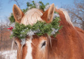 Horse wearing a Christmas wreath over his ears, looking at the viewer — Stock Photo