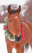 Red bay horse wearing a Christmas wreath on a cold winter day — Stock Photo