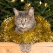 Blue tabby cat in golden tinsel with a Christmas tree background — Stock Photo #71280903