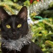 Tiny black cat wearing silver tinsel, with Christmas tree background — Stock Photo #71280195