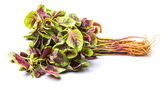 Chinese Red Spinach — Stock Photo
