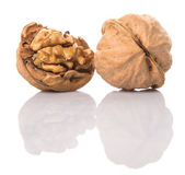 Walnut Nut — Stock Photo