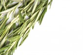Rosemary Herbs — Stock Photo