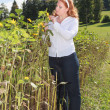 Chubby young red-haired woman controls the maturation of a sunflower — Stock Photo #54290435