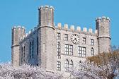 城堡塔与时钟在盛开的樱花树 — 图库照片