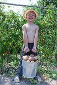 Boy holding bucket of potatoes — Stock Photo