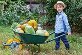 Boy with wheelbarrow in garden — Stock Photo